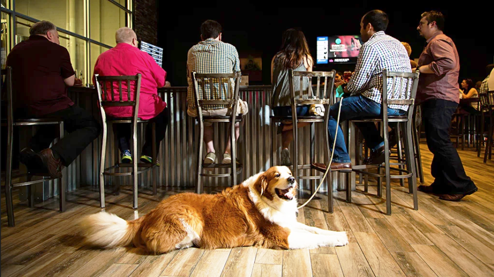 breweries-with-dogs